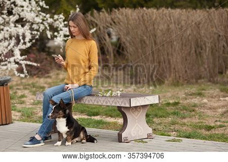 A Beautiful Girl In A Yellow Sweater Is Texting On Her Mobile Phone, Smiling, Walking Her Dog Welsh