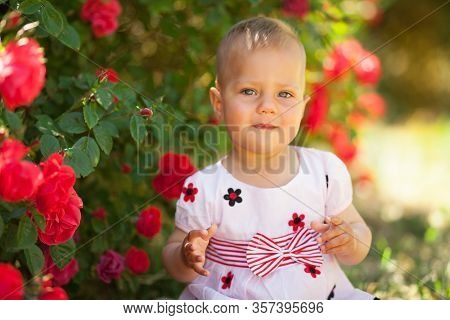 A Cheerful Beautiful Baby In Blooming Roses Smiles And Looks At The Camera. The Concept Of Childrens