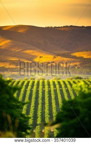 Vineyards in McLaren Vale, South Australia