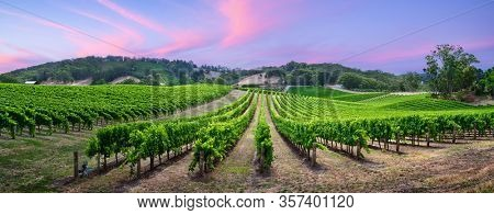 Stunning vineyard in the Adelaide Hills, South Australia