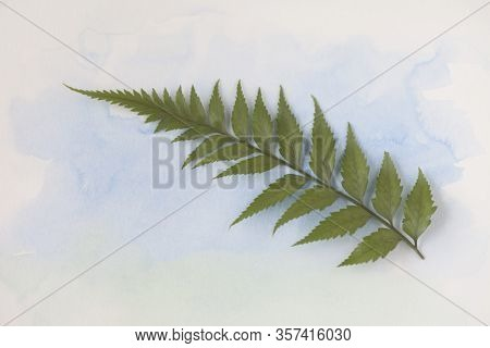 Single Frond Of A Fern Plant On Pale Blue Watercolor