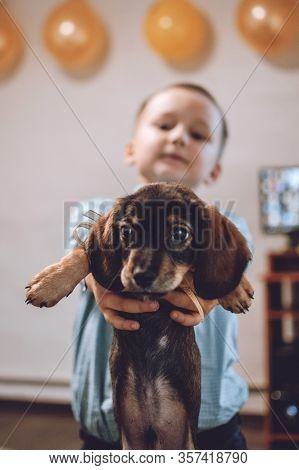 Giving Puppy As Gift. Kid, Little Boy Getting Surprised With Dachshund Puppy. Pet Lovers, Animal Lov