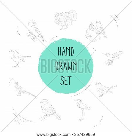 Set Of Fauna Icons Line Style Symbols With Weaver Bird, Goldfinch, Hummingbird And Other Icons For Y