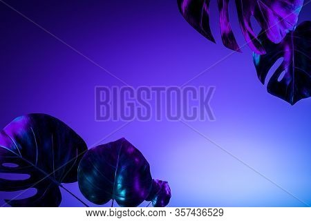Realistic Tropical Multicolored Gradient Plant Leaves. 3d Rendering. Background. Wallpaper