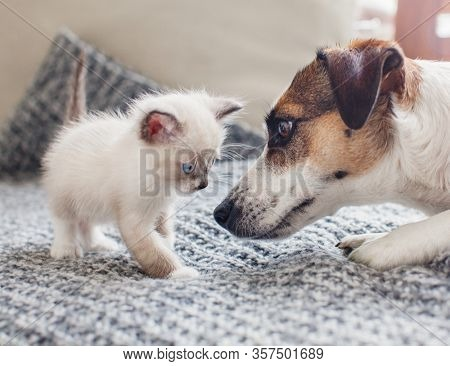 Dog and cat together. Dog and kitten friends