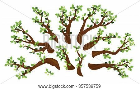 Set Of Ten Oak Branches With Green Leaves Isolated Illustration, Group Of Different Branches For Tre
