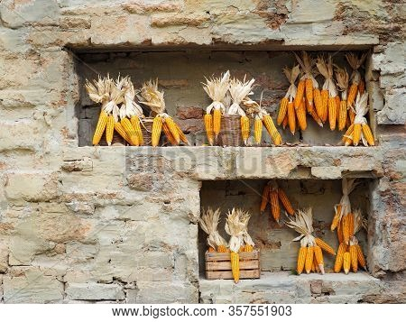 Dried Corn Hanging On Shelves On The Wall.dried Corn On Against Soil Brick Wall.background And Textu