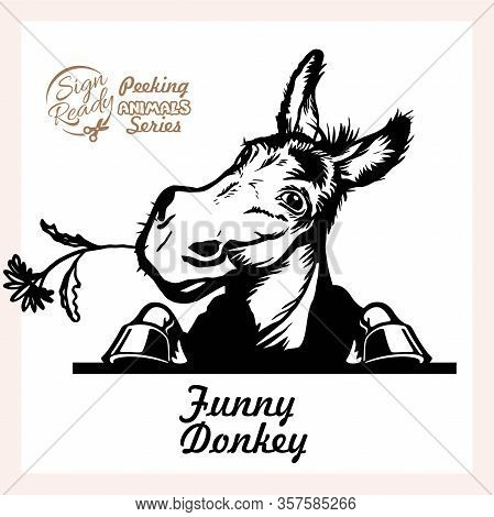 Peeking Funny Donkey - Funny Donkey Peeking Out - Face Head Isolated On White