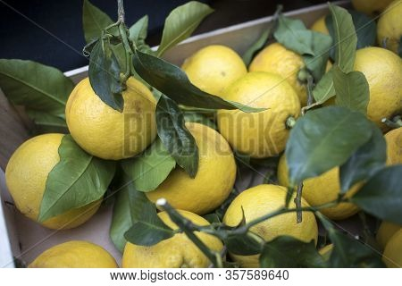 Large Lemons With Thick Peels At The Farmers Market.