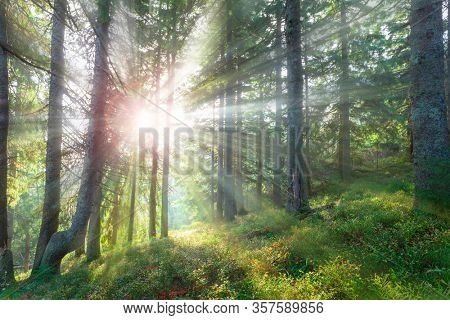 Beautiful forest in summer with bright sun shining through the trees.