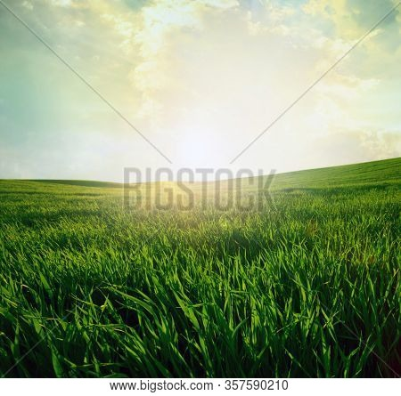 Green meadow under blue sky with clouds. Beautiful nature sunset landscape