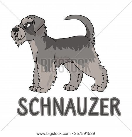 Cute Cartoon Schnauzer Dog Breed With Text Word Print Vector Clipart. Pedigree Kennel Doggie Breed F