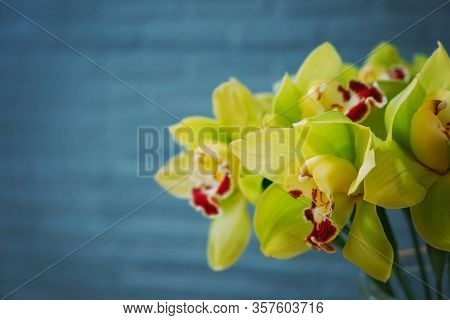 Green Orchid Bouquet Close Up, Flower Arrangement In The Shop. Gorgeous Green Cymbidium Orchid Plant