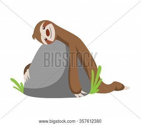 Cute Baby Sloth Lies On A Stone. Vector Funny Sloth Illustration For Summer Design. Adorable Cartoon