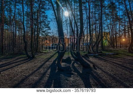 Nightshot With Full Moon At The Crooked Forest Krzywy Las