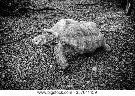 Wild Turtle, Exotic Wild Animal, Nature In World