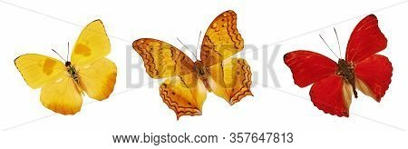 Set Of Beautiful Yellow, Red And Orange Butterflies. Cymothoe Excelsa Isolated On White Background.