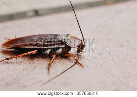 Selective Focus Of Cockroach On The Cement Floor, Close Up Of Cockroach On Street, Insects On Concre
