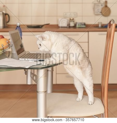 Work From Home, Intelligent Cat And Laptop In Kitchen Interior, Remote Working From Home. Freelance
