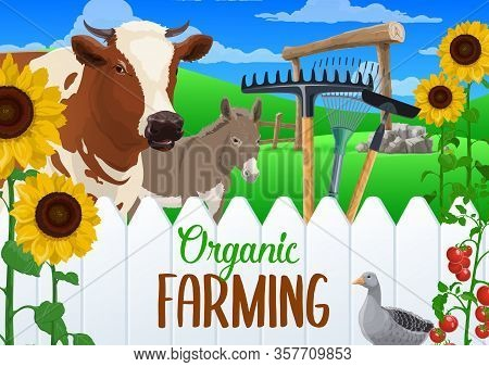 Farm Animal And Vegetable Harvest With Farming And Agriculture Tools. Vector Cow, Donkey And Goose,