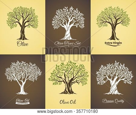 Olive Tree Vector Icons Of Olive Oil Food Labels And Mediterranean Plant Symbols. Old Trees With Bra
