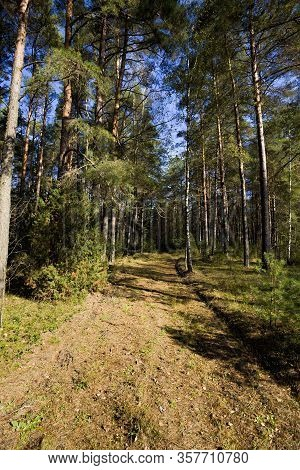 The Dividing Strip To Ensure Fire Safety In The Forest Which Is Used For The Movement Of Cars, The A