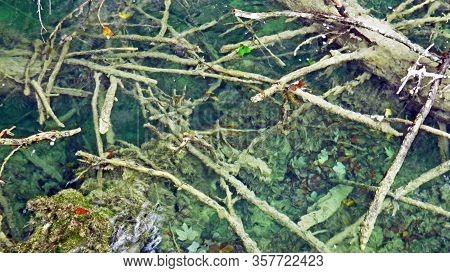 Flora And Forest Of Plitvice Lakes National Park Or Nacionalni Park Plitvicka Jezera, Unesco Natural