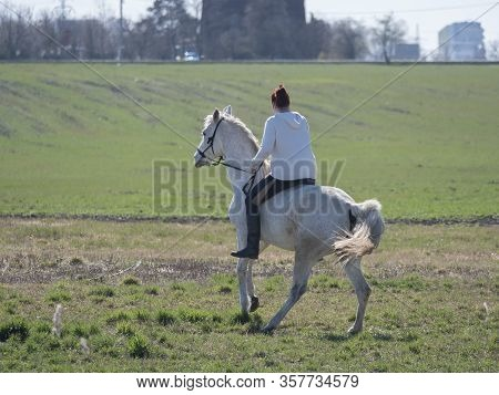 Young Sport Woman, Redhead Girl Riding On White Horse Walking Backwards At Green Spring Field At Cit