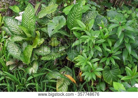 Green Leaves Of Tropical Plants. Floral Nature Background