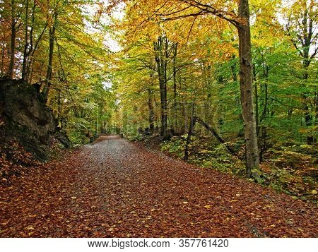 Autumn Atmosphere In The Mixed Deciduous Forest On The Lika Side Of The Velebit Mountain, Croatia (j