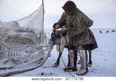 The Extreme North, Yamal,   Reindeer In Tundra, Assistant Reindeer Breeder,  The Men  In National Cl