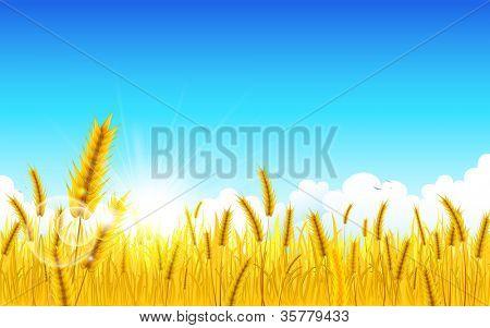 illustration of landscape of golden wheat farm