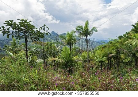Flora And Landscape Of Luquillo Mountains In El Yunque National Forest Of Puerto Rico