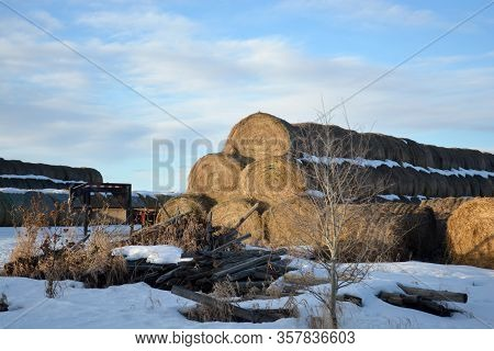 Large Stacks Of Hay Bails On A Snowy Farm Field In Winter
