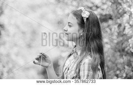 Dandelion Full Symbolism. Folklore Beliefs About Dandelion. Having Fun. Girl Rustic Style Making Wis