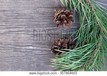 Twig Of Young Pine And Cones On A Wooden Background. Christmas Tree. Pine Branch In Early Spring. Br