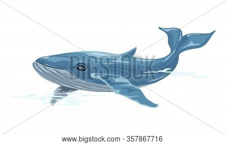 Whale Is Aquatic Placental Marine Mammal With Streamlined Fusiform Body And Two Limbs That Are Modif