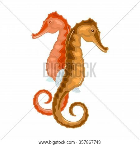 Seahorse Has Head And Neck Suggestive Of Horse, Segmented Bony Armour, Upright Posture, Curled Prehe