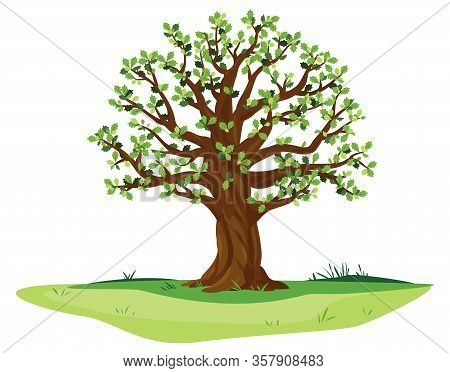 One Wide Massive Old Oak Tree With Green Leaves And Acorns Isolated Illustration, Majestic Oak With