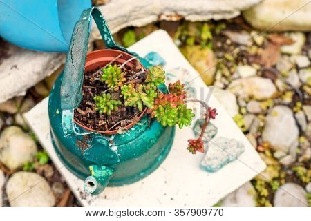 Reused Planter Ideas. Second-hand Kettles, Old Teapots Turn Into Garden Flower Pots. Recycled Garden
