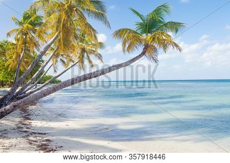 Caribbean Mustique Island one of the Grenadines tropical beach with palm trees and turquoise ocean water