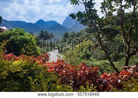 Tropical forest of Caribbean Saint Lucia tropical island, Pitons mountains  in the background