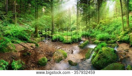Enchanting Panoramic Forest Scenery With Soft Light Falling Through The Foliage And A Stream With Tr