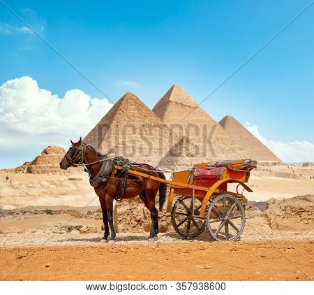 Horse On The Background Of The Pyramids In Giza