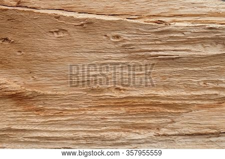 Old Weathered Mouldering Tree. Old Rotten Wood. Weathered Tree Destruction. Background Or Texture. D