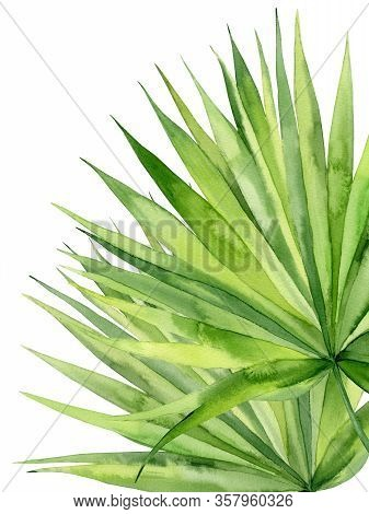 Tropical Palm Branches. Exotic Plant Detail For Card, Postcard, Invitation, Greeting. Watercolour Il