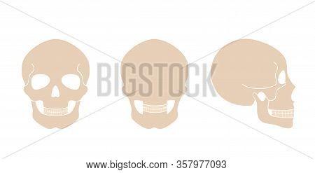 Human Skull Anatomy. Flat Vector Medical Illustration Isolated. Structure Of Facial Skeleton. Craniu