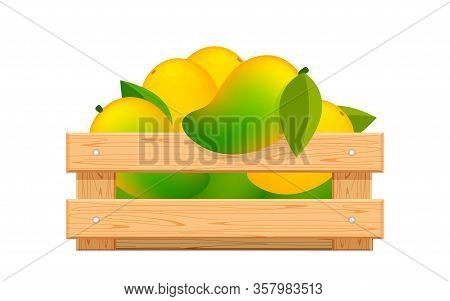 Ripe Mango In Wood Crate Box Isolated On White, Mango Fruit Pack In Wooden Crate, Illustration Mango