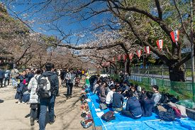 Tokyo, Japan - Mar 24, 2019: People At Ueno Park During Cherry Blossom Season In Japan