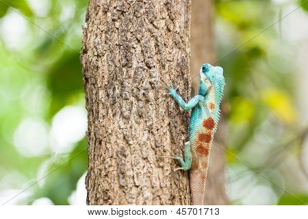 Lizard Sitting On The Tree